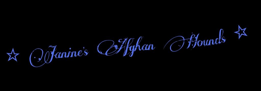 Janine´s Afghan Hounds